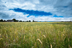 Crops of hay Stock Photography