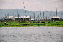 Crops at Inle Lake. Stock Image