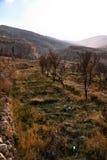 Crops at Maaloula Stock Photography