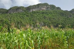 Crops and mountains of Vinales, Cuba Royalty Free Stock Photography