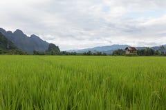 Crops and natural. Stock Photos