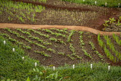 Crops Royalty Free Stock Images