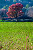 Crops in Provence, France Stock Photos