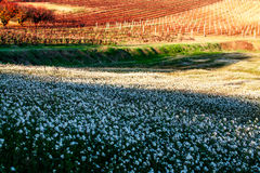 Crops in Provence, France. Shot in a quiet afternoon just about when sun was about to set Stock Photography