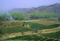 Crops on Road to Simatai  27801 Royalty Free Stock Image