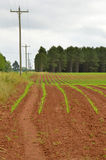 Crops in rows Royalty Free Stock Image