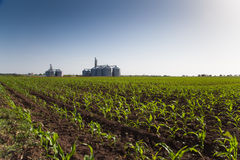 Crops and Silos Royalty Free Stock Image