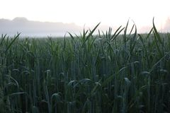 Crops on sunset Royalty Free Stock Photography