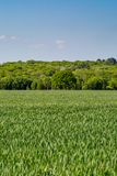Crops in the Sussex Countryside. Farmland in Sussex on a sunny spring day Stock Photo