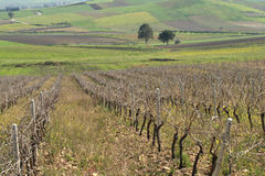 Crops and vineyards Royalty Free Stock Photos