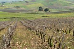 Crops and vineyards. Sicilian hinterland vineyards and farmlands Royalty Free Stock Photos
