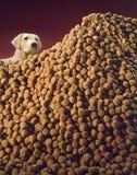 Croquetes do cão Imagens de Stock