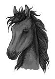 Croquis Arabe noir de tête de cheval Image stock