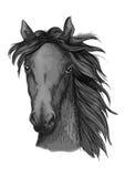 Croquis Arabe noir de tête de cheval Images libres de droits