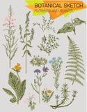 Croquis botanique illustration stock