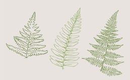Croquis botanique illustration de vecteur