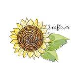 Croquis coloré d'été, style copic de marqueur d'aquarelle Tournesol lumineux et brouillé avec des feuilles Inscription du tournes illustration de vecteur