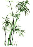 Croquis décoratif magnifique distingué traditionnel chinois de bambou de main Photos stock