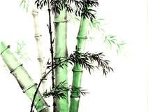 Croquis décoratif magnifique distingué traditionnel chinois de bambou de main Images libres de droits