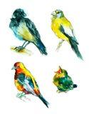 Croquis d'aquarelle des oiseaux Photos stock