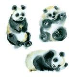 Croquis d'aquarelle des pandas Photos stock