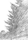 Croquis d'arbre de sapin Image stock
