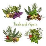 Croquis d'assaisonnements d'épices et d'herbes de vecteur illustration stock