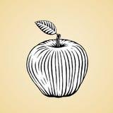 Croquis d'encre d'Apple avec la suffisance blanche Photographie stock libre de droits