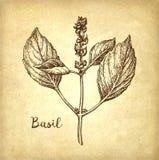 Croquis d'encre de Basil Image stock