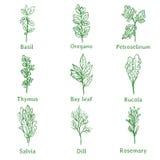 Croquis d'herbes Image stock