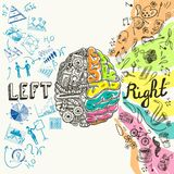 Croquis d'hémisphères de cerveau Images stock