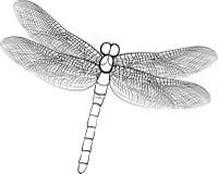 Croquis d'illustration d'une libellule d'isolement sur le blanc Photographie stock