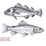 Croquis d 39 illustration de vecteur p tes restaurant d - Croquis poisson ...