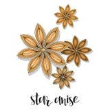 Croquis d'isolement d'objet d'anis d'étoile Épice pour la nourriture Assaisonnement culinaire Images stock