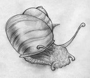 Croquis d'un escargot Photo libre de droits