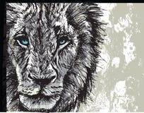 Grand lion africain masculin Image libre de droits