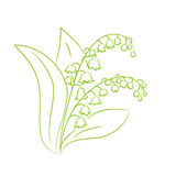 Croquis d'un muguet de fleur Photos libres de droits