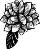 Croquis d'un ornement végétatif Photographie stock
