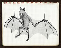 croquis de 'bat' 3d 4 Photos stock