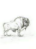 Croquis de bison illustration de vecteur