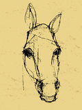 Croquis de cheval sur le papier Photo libre de droits