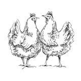 Croquis de Chiken Illustration Stock