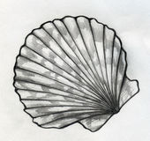 Croquis de coquille de mer Photo stock