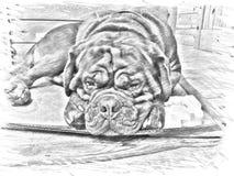Croquis de crayon d'un chien Images libres de droits