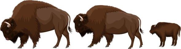 Croquis de famille de bison illustration libre de droits