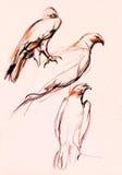 Croquis de faucon Photos libres de droits