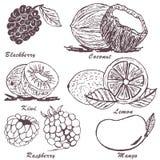 Croquis 3 de fruit Images libres de droits