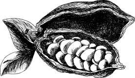Croquis de graines de cacao Photos libres de droits