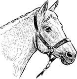 Croquis de la tête de cheval Images libres de droits