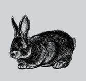 Croquis de lapin illustration de vecteur